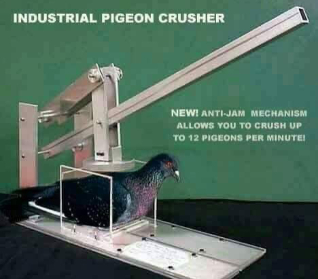 Frick Pigeons - meme