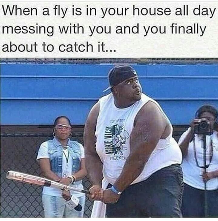*mosquitoes - meme