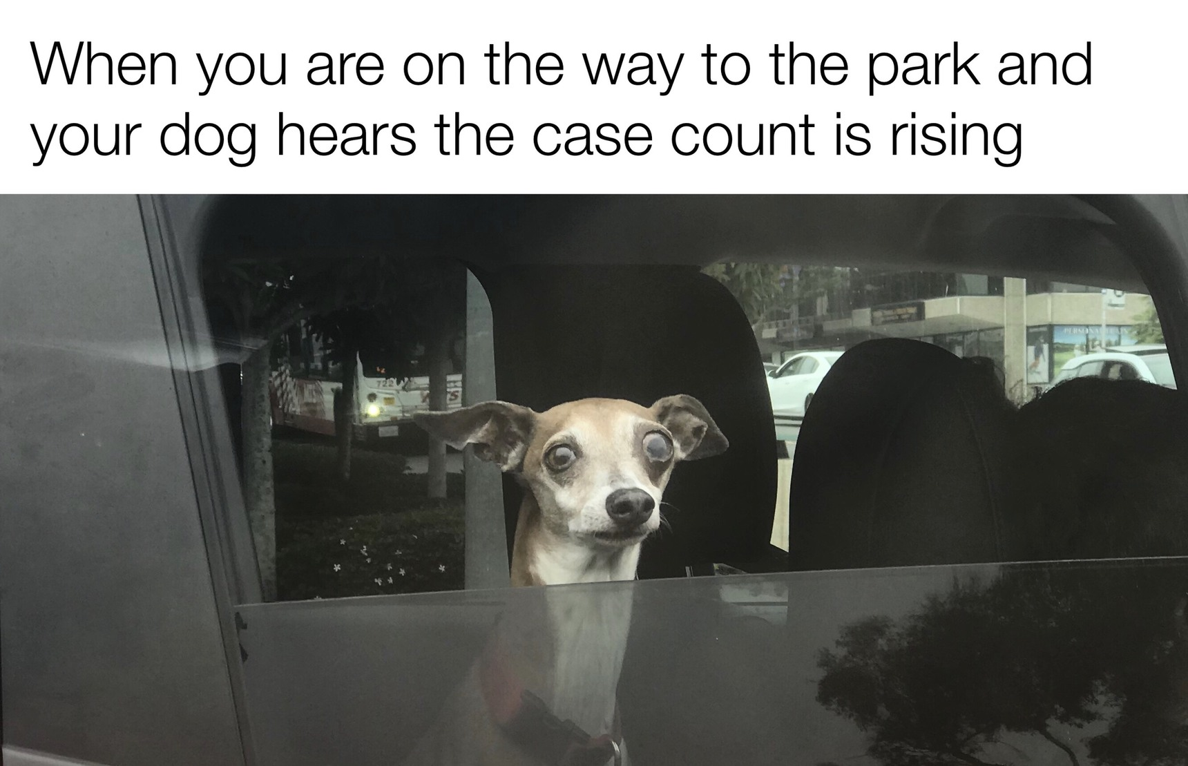 One scared puppy - meme
