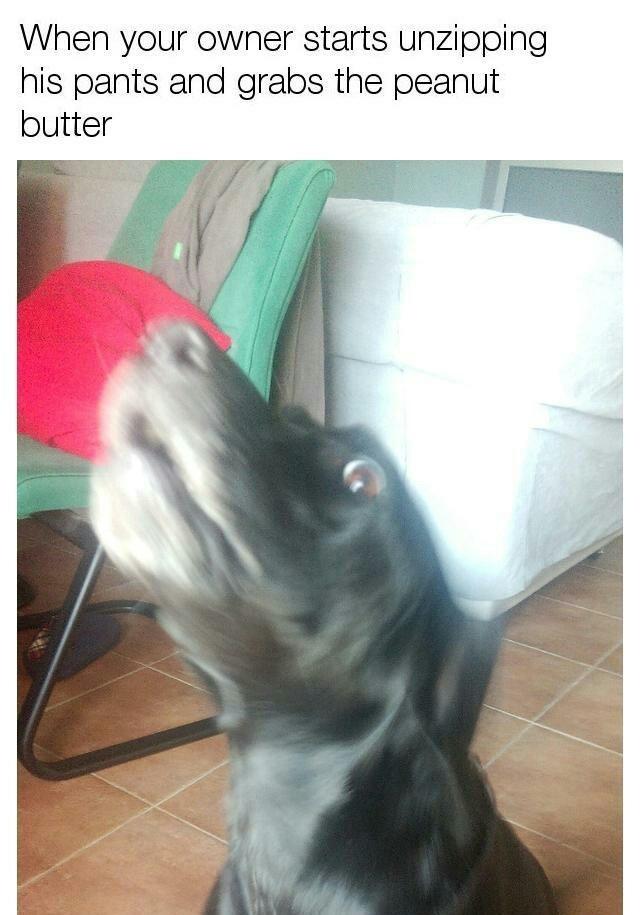I wonder how often dogs bite owners doing this? - Meme by Nacke