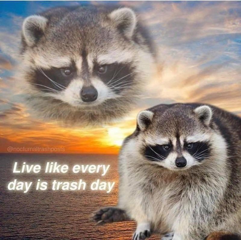 Inspirational Raccoon - meme