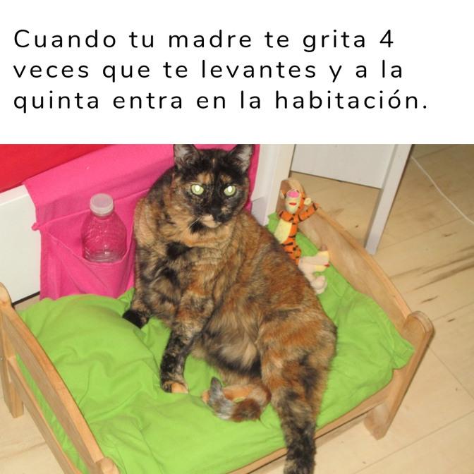 La gata es mía xD - meme