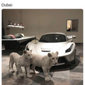 How Dubai administrates all the oil money