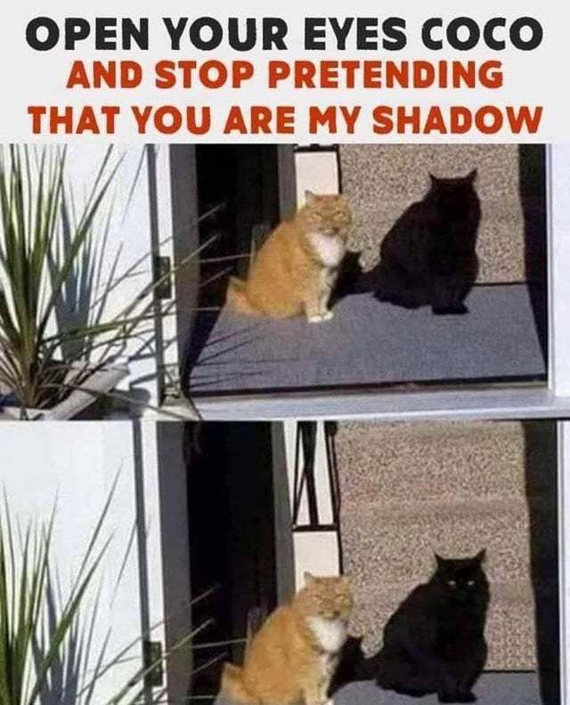 Stop pretending you are my shadow, Coco - meme