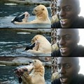 Que linda amizade...