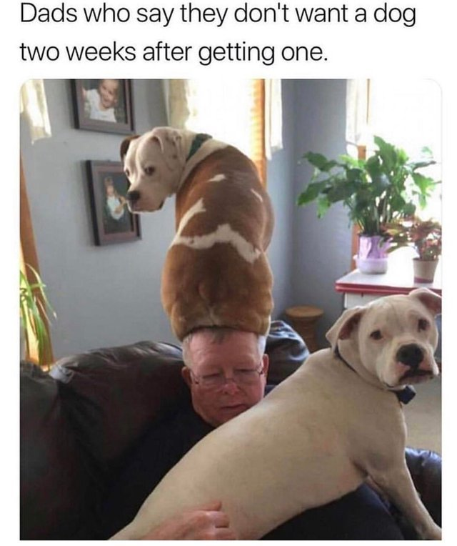 Dads who say they don't want a dog two weeks after getting one - meme