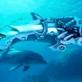 These are dolphinski and dolphini's aromor