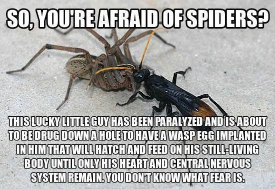 Forget the spiders. IM SCARED OF THE OTHER BUG NOW! - meme