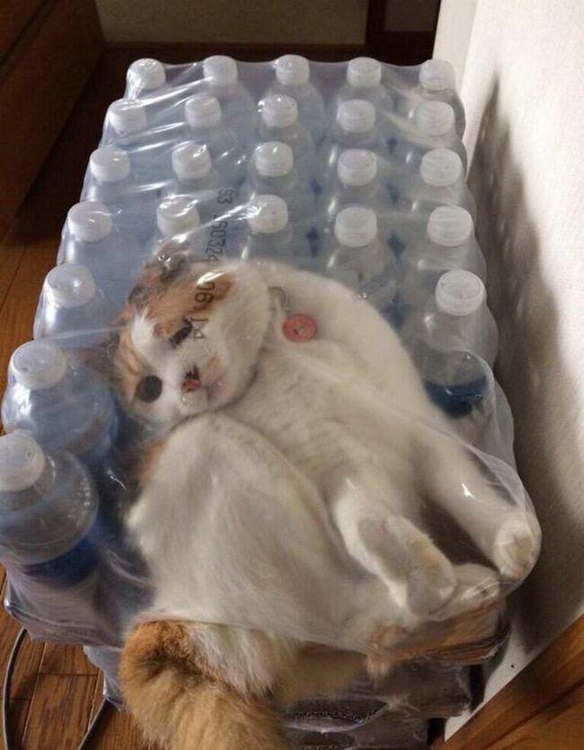 A triste e solitária historia do gatinho :( - meme