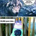 Dangerous wolves