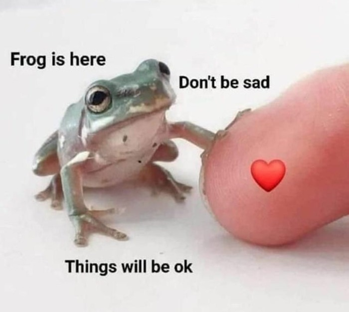 Frog is here for you, I am too. - meme