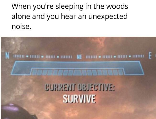 Hammock camping amiright - meme