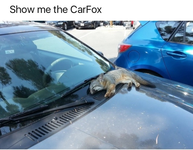 Carfax - meme