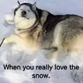 Snow Lover