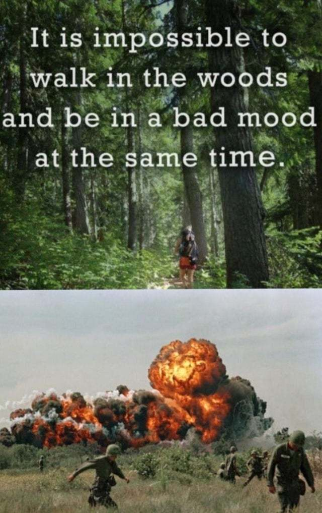 It is impossible to walk in the woods and be in a bad mood at the same time - meme