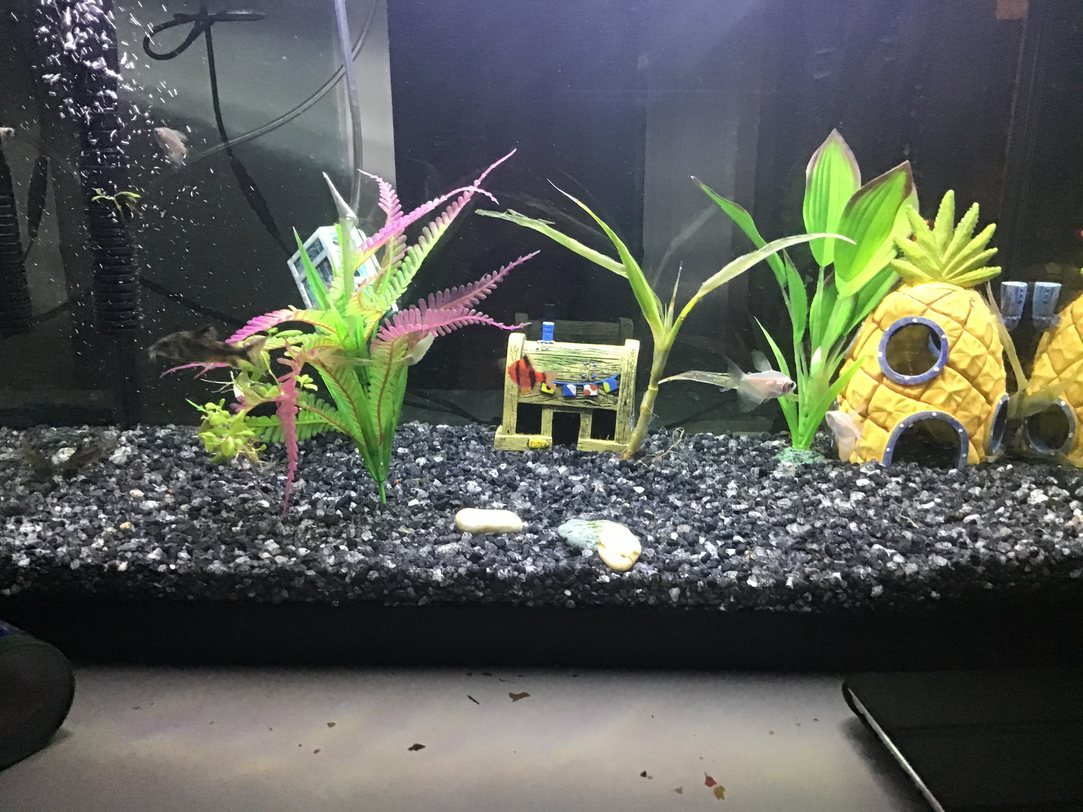 These are my fish. They are Wade, Skelly, Garfield, and Mew. Not a meme, just showing them to you. Happy Friday.