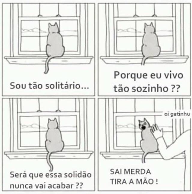 na vida eu sou esse gato - meme
