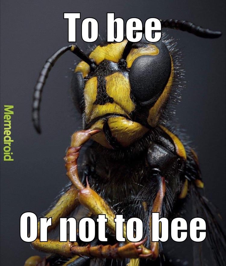 beezarre - meme