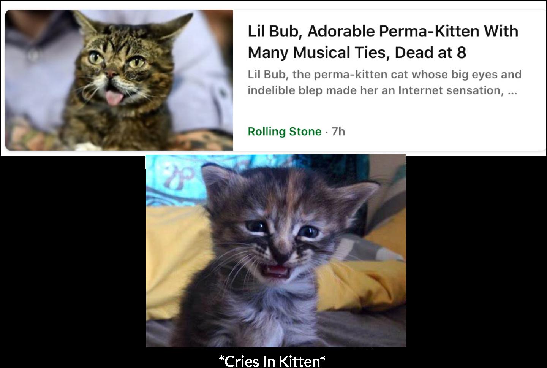 Rip Lil Bub. We miss you.  - meme