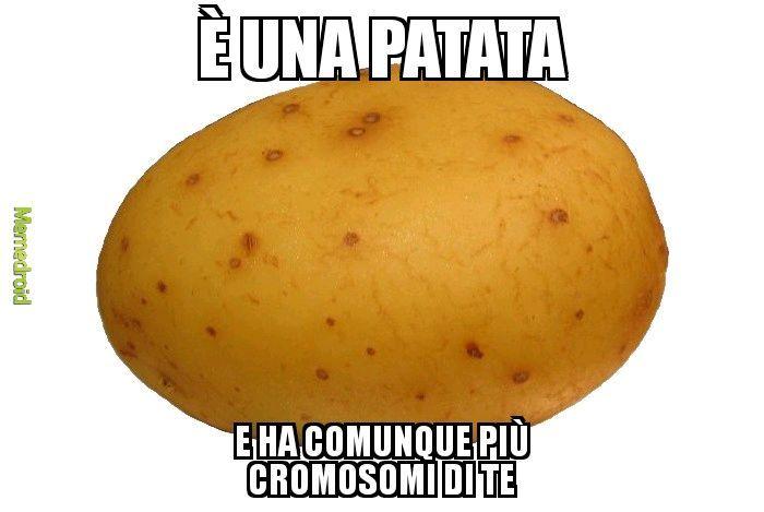 Potreto - meme