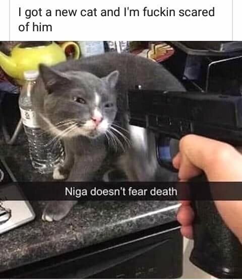 I got a new cat and I'm fucking scared of him - meme