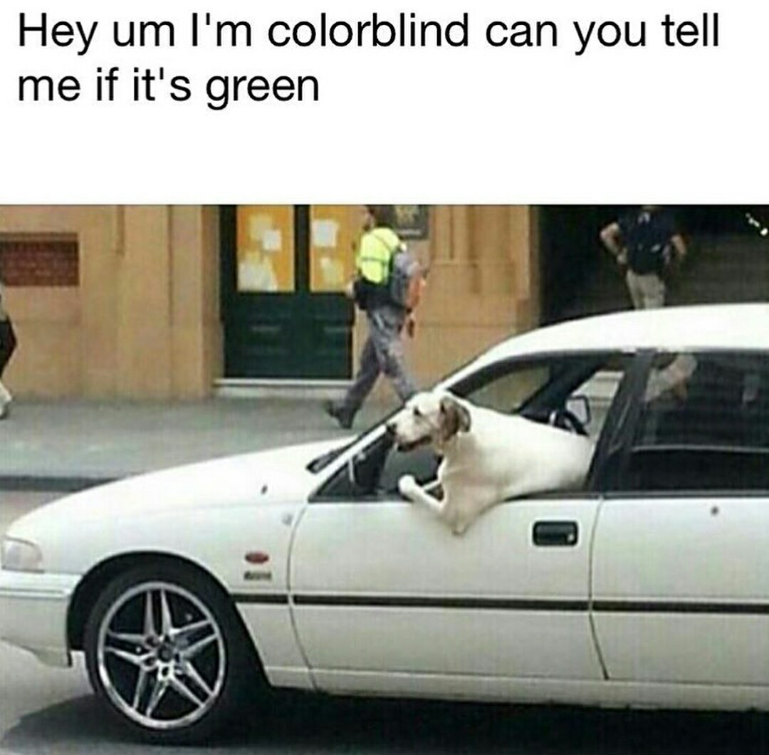Colorblind Doggo. ;-; - meme