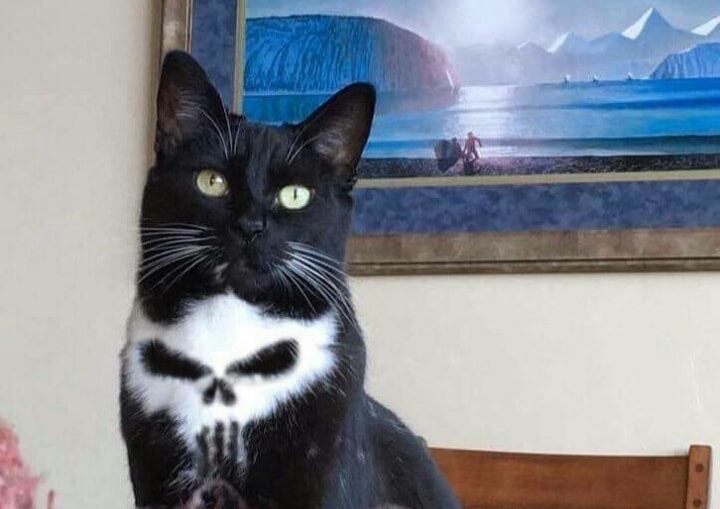 Kitty of death - meme