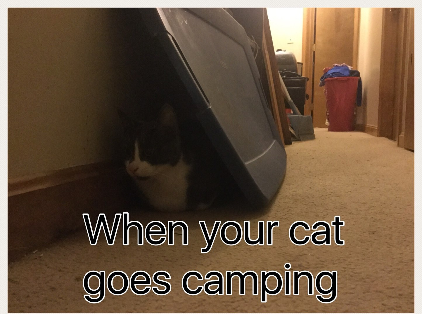 When your cat goes camping. XD - meme