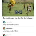 big bird will get ya