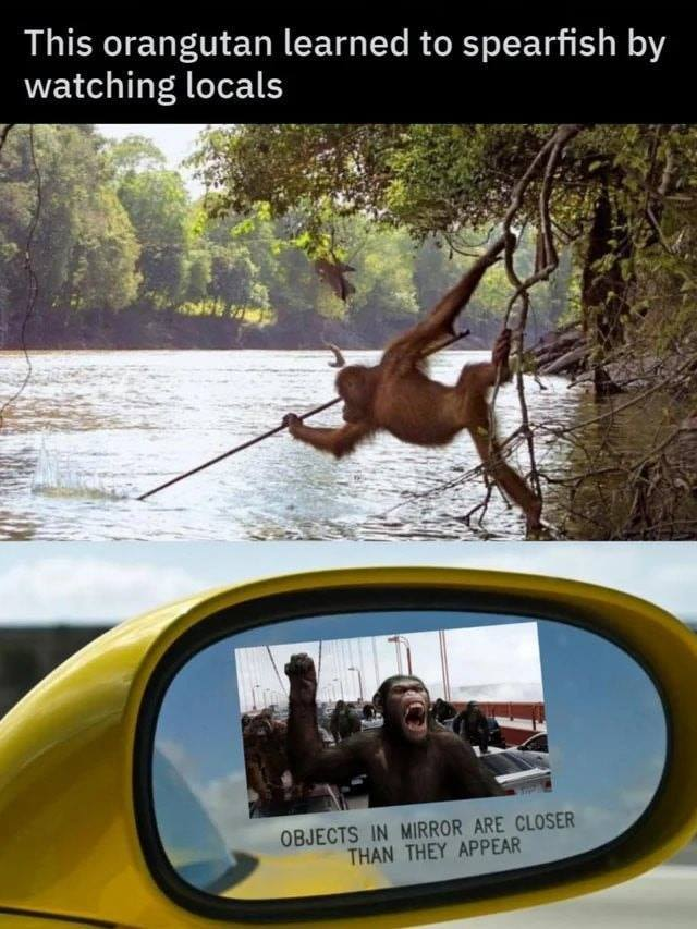 Apes together strong, Apes spearing good - meme
