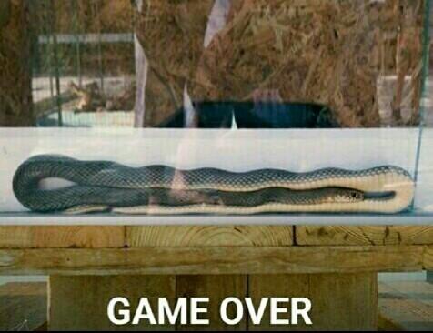 Snake game - meme