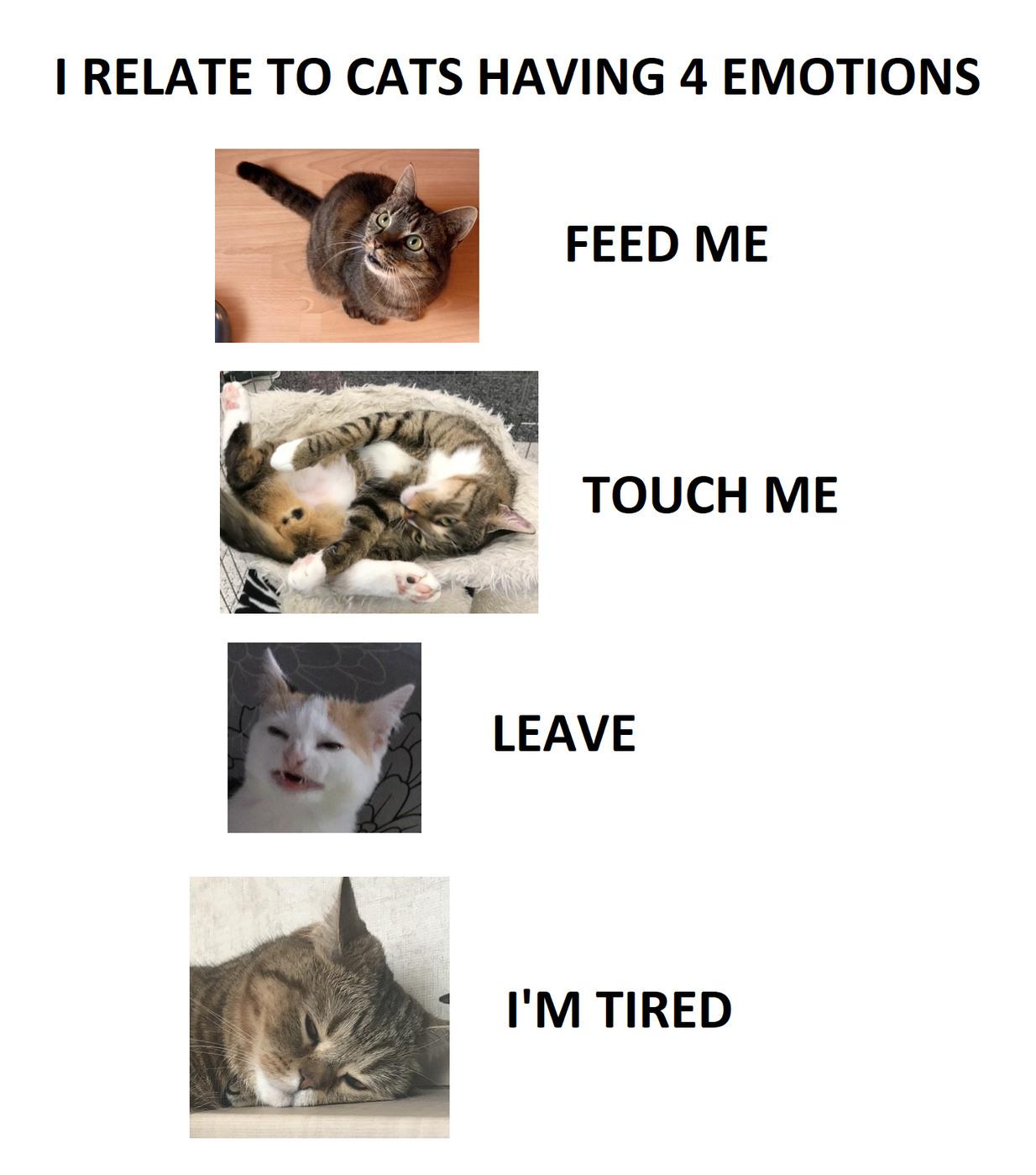 KATS - meme