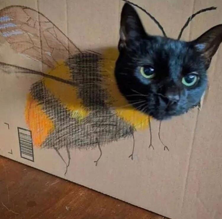 bee cat - meme