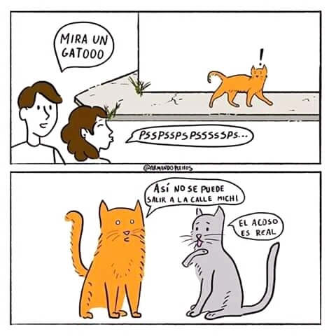 Felinazis - meme