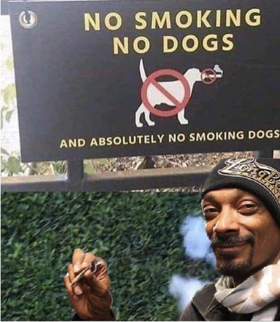 Oh dogg - meme