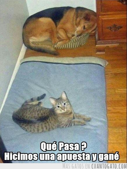 los gatos noa dominarán - meme