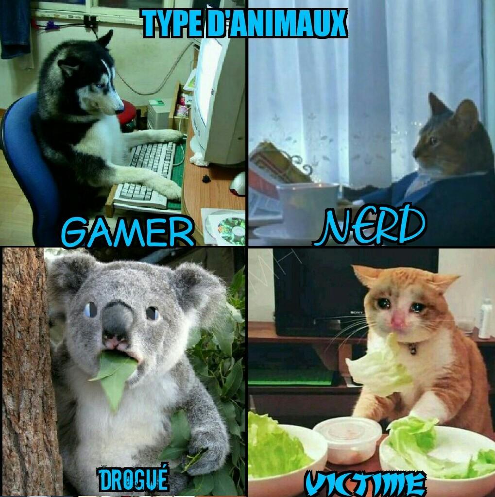 Les différents types d'animaux - meme