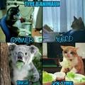 Les différents types d'animaux