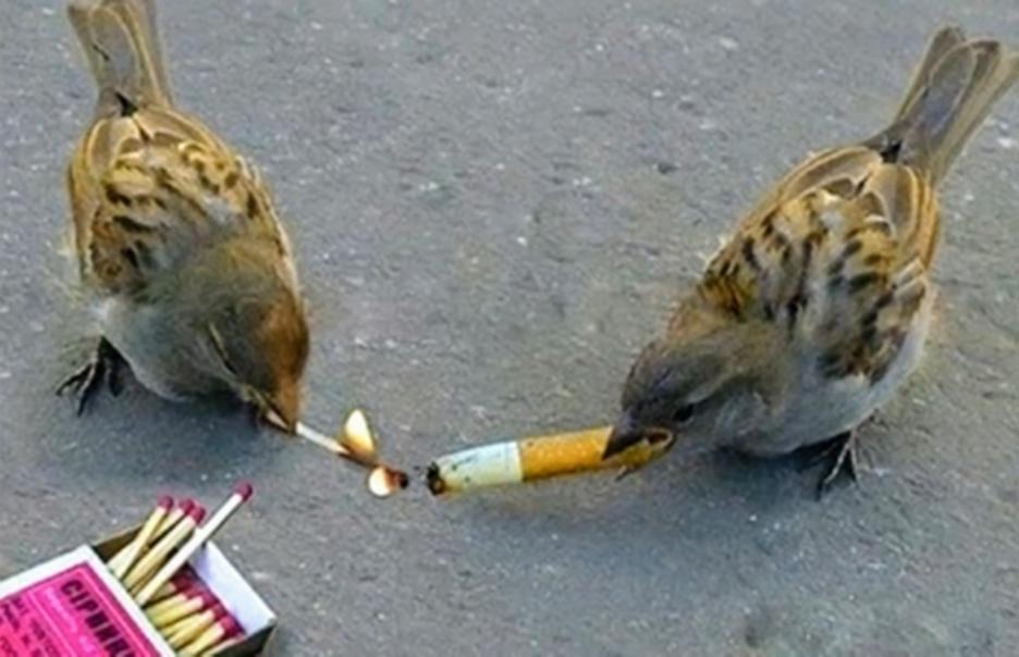 Wanna smoke bro? - meme