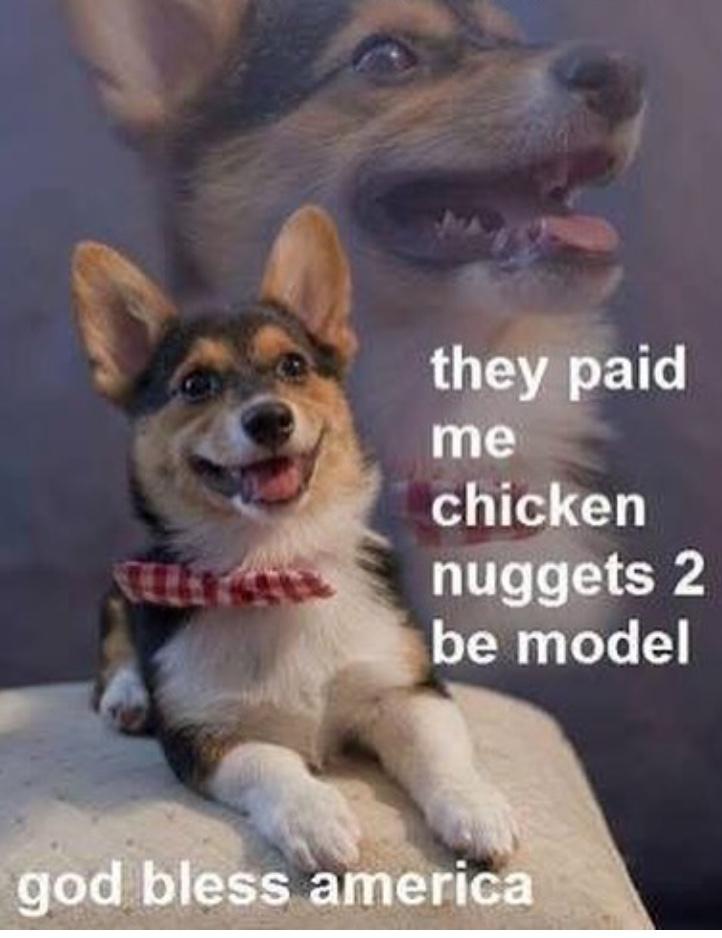 nuggets - meme