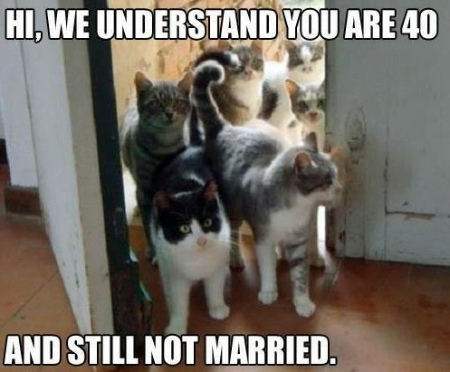 Cat Marriage - meme