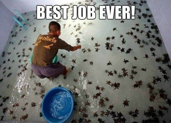 this is the best job in the world - meme