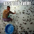 this is the best job in the world