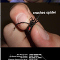 3rd comment is a spider