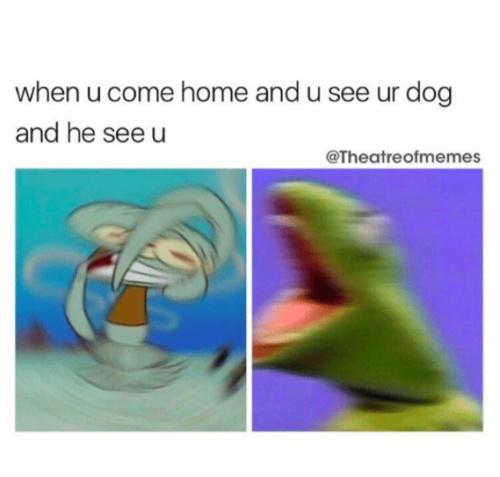 PUPPIESSSSSSSS - meme