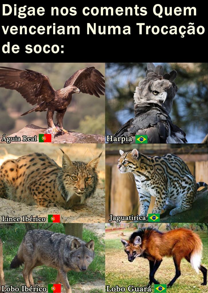Portugal Vs Brasil - meme