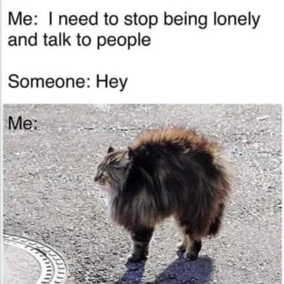 Not much - meme