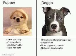 Pupper or Doggo - meme