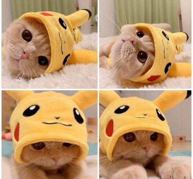 pika cat - meme