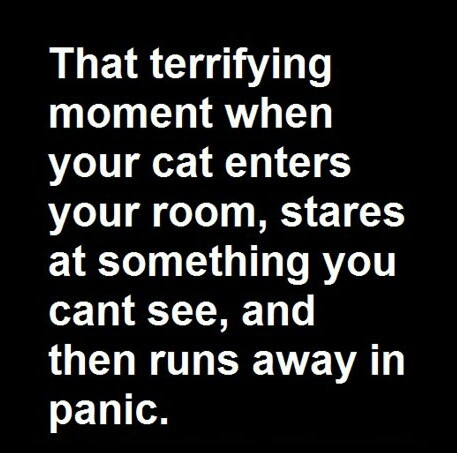 Truly terrifying - meme